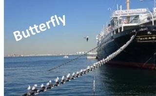 butterfly0202.jpg