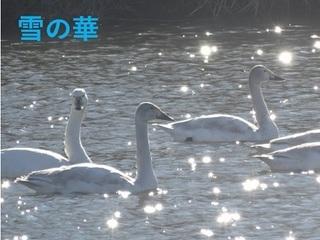 hakutyo1102.jpg