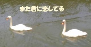 kobuhakutyo0718.jpg