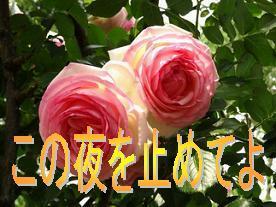 konoyoru0801.jpg